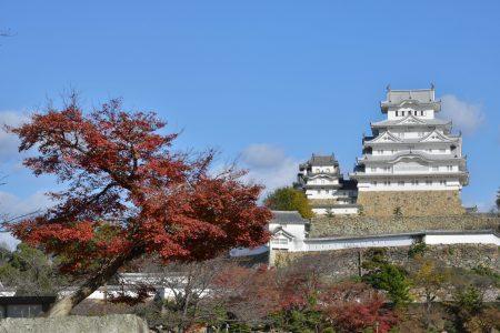 秋=姫路城と紅葉(4)