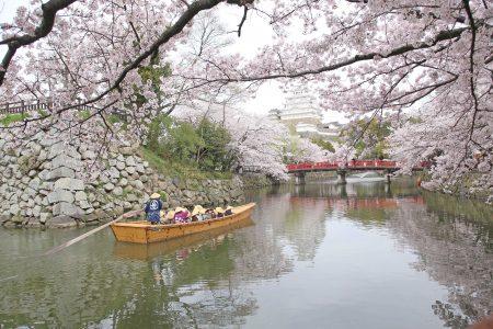 春=姫路城と桜(8)